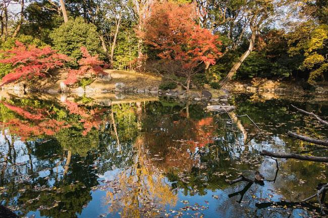 拾翠亭の池と紅葉
