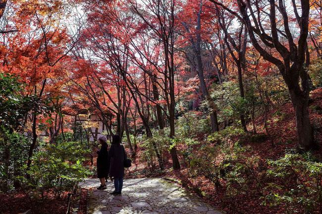 嵐山・常寂光寺の紅葉