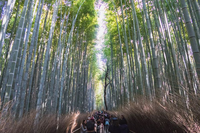 嵐山竹林の小径