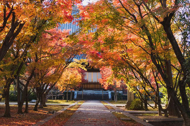 京都のお寺の紅葉