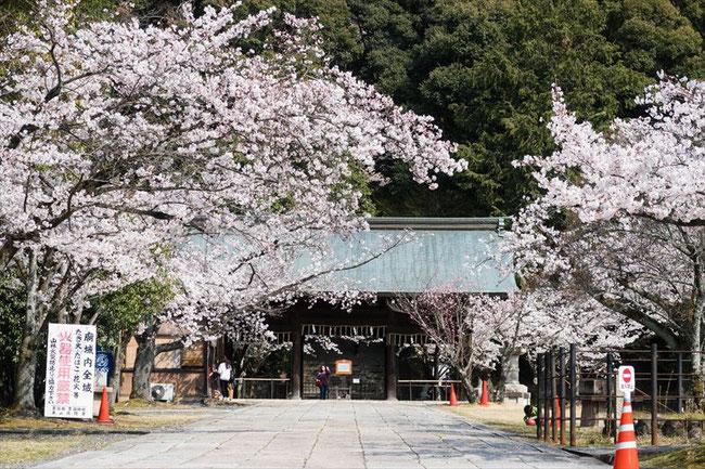 (京都桜の穴場)秀吉のお墓「豊国廟」の桜