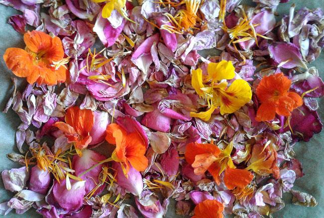 kapuzinerkresse, rosen, ringelblumen, im haus trocknen