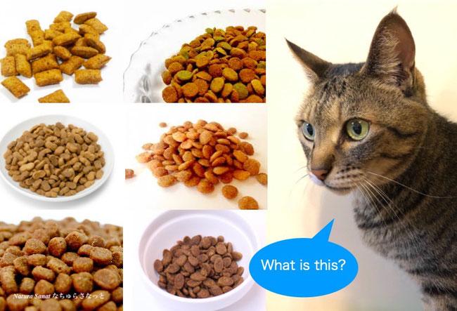 自然食育ちの猫とキャットフードの画像