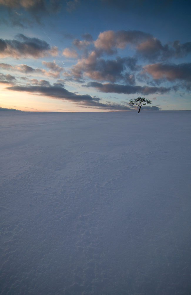 Wide field covered with deep snow and solitaire tree, sunset in winter, colorful sky, Limburger Land, Hessen, Germany