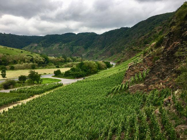 best german vineyards - the bremmer calmont