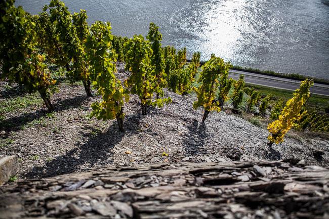 best german vineyards - bopparder hamm