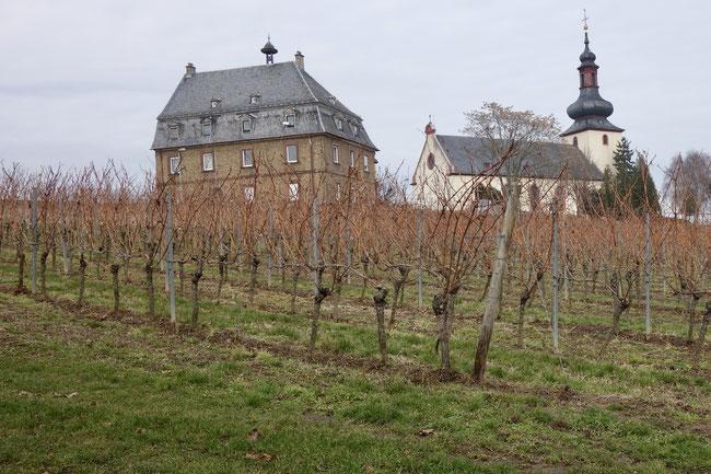 best german vineyards - the glöck