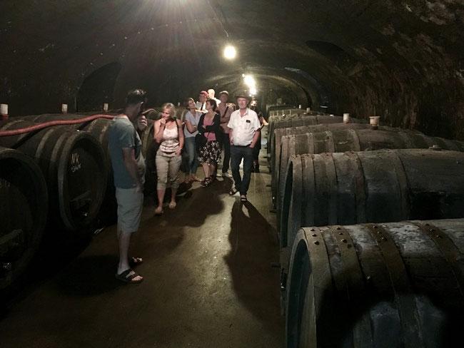 Barrel cellar, winery J Neus,  Ingelheim