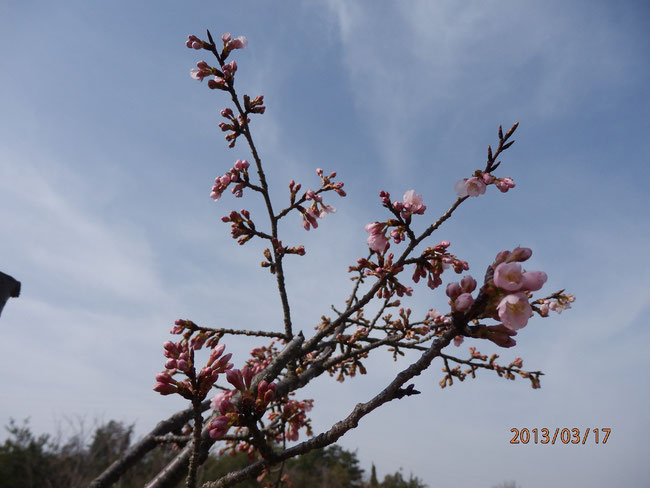 2013春到来 in 尾道 Spring has come in Onomichi in 2013
