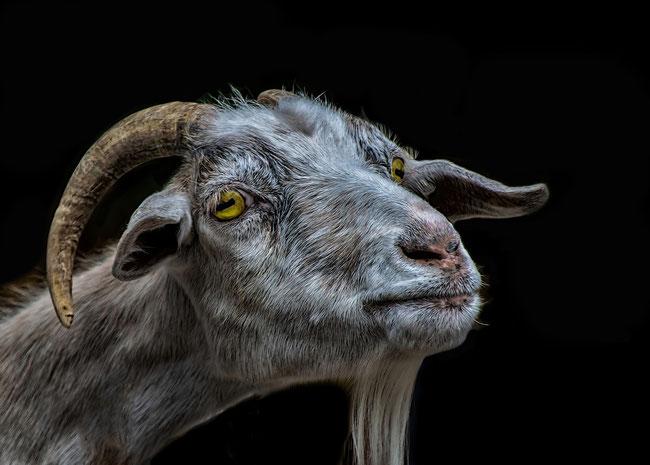 Der Ziegenbock ist auch im Okkultismus ein Symbol für den Bösen.