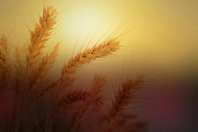 Als eine Vorschattung Jesu stellt Josef den dar, der uns das tägliche Brot gibt. Durch Golgatha teilt uns Jesus das wesenhafte Leben zu. https://www.freudenbotschaft.net/gleichnisse/das-biblische-gleichnis-von-dem-als-ehebrecher-geltenden-hinzufüger/