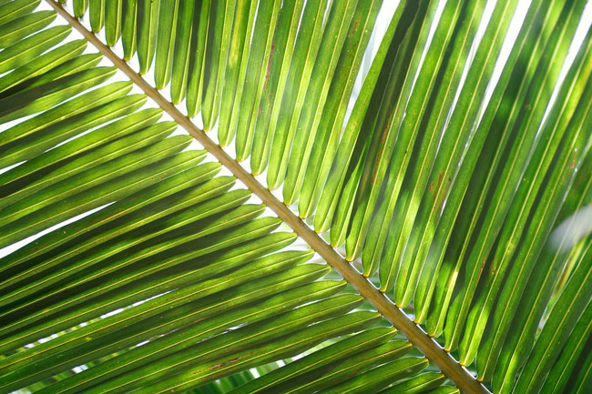 """Jesus Christus ist die große """"Tamar"""", d. h. die große """"Palme"""" https://www.freudenbotschaft.net/gleichnisse/das-biblische-gleichnis-von-der-sich-als-hure-darstellenden-palme/"""
