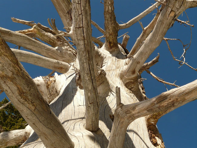 Im Geäst bzw. Gestrüpp des Pfahles von Golgatha verfängt sich der Sündenbock Gottes. https://www.freudenbotschaft.net/gleichnisse/das-biblische-gleichnis-vom-geopferten-lachen-gottes/