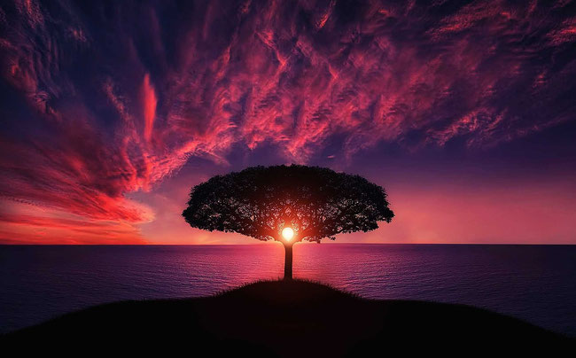 Jesus Christus ist der den Tod besiegende Baum des Lebens.