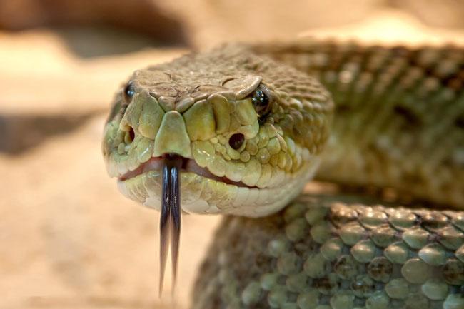Es sollte uns zu denken geben, warum sich Jesus ausgerechnet mit einer Schlange verglich, denn sie ist ein Symbol des Bösen. https://www.freudenbotschaft.net/gleichnisse/das-biblische-gleichnis-vom-zur-schlange-gewordenen-retter/