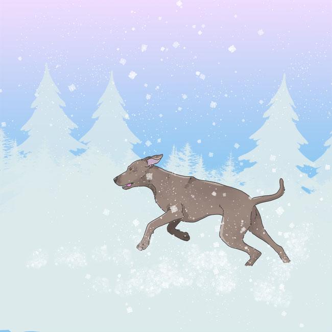 Photoshop, digital, kreativ, Hund, Tier, Schnee, Winter, kalt, Spaß, Fun, Schneeflocken, rennen, kreativ, digital