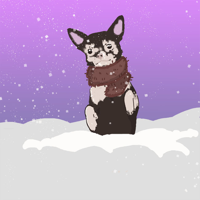 Photoshop, Chihuahua, Hund, Tier, Schnee, Winter, kalt, Zeichnung, Schal, kreativ, digital