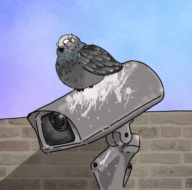 Photoshop, digital, Taube, Überwachungskamera, Kamera, Wand, Tier, Vogel, kreativ, Zeichung