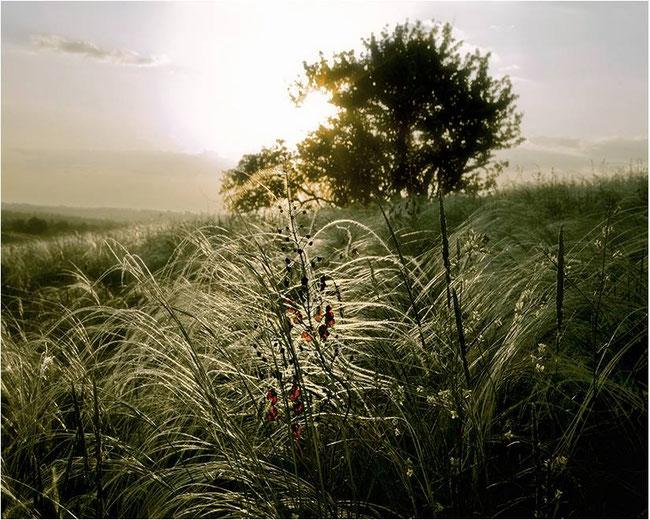 Фото запорізького фотохудожника Сергія Лаврова