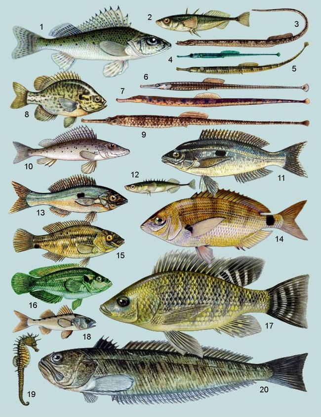 Риби Запорізької області