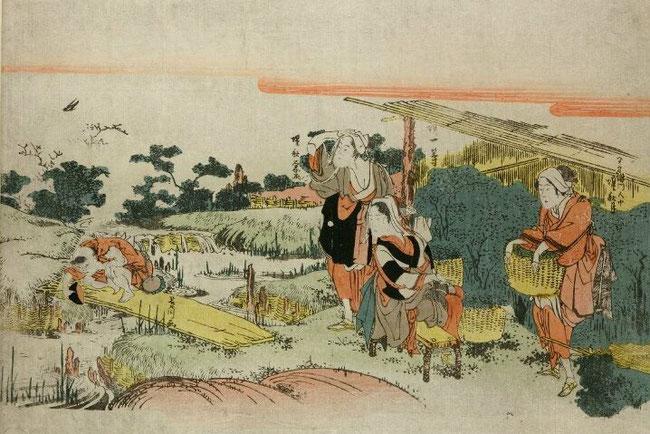 宇治茶摘図(無款)