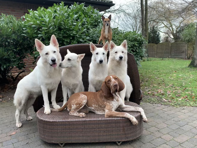 oben: Emma, unten: Enno, Mitte von links: Luigi, Milka, Arjuna, Nayeli