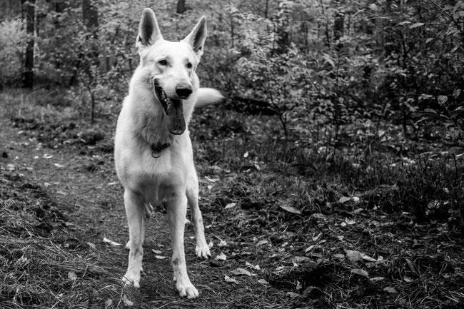 Vakantie hond Sauerland