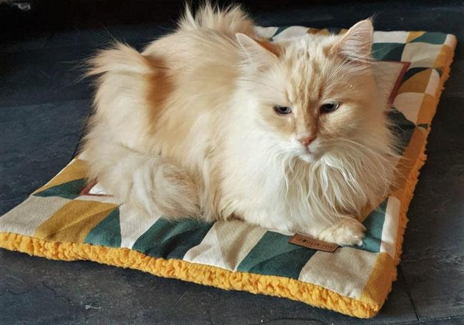 Tolle Katzendecke 'Mr. Cap' von Frollein Fell auch für große Katzen Katzenmotiv gelbes Teddyfleece