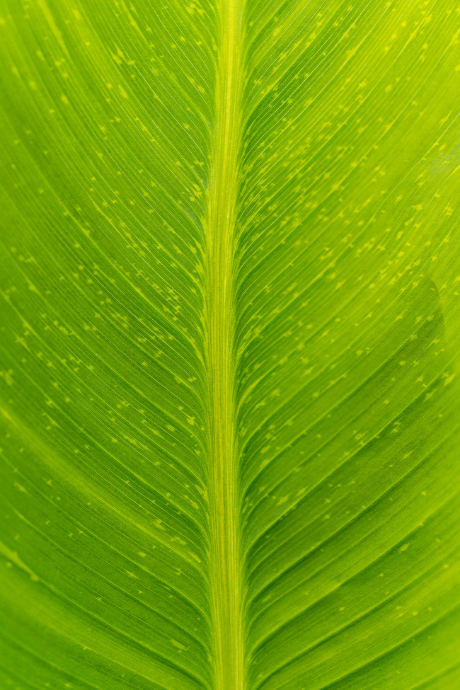 Conny - Foto 5 - Wunder der Natur