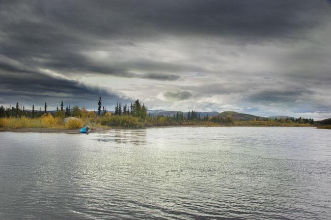 Spey Fishing for Sheefish at Kobuk River Alaska