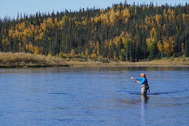 Spey Casting Kobuk River Alaska for Sheefish
