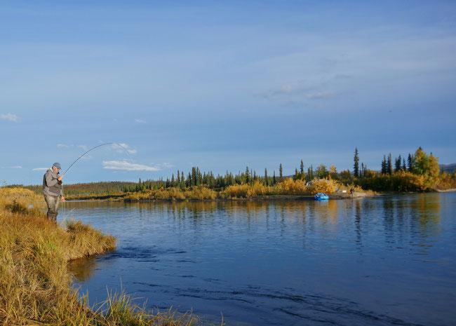 flyfishing Kobuk River, Alaska for Sheefish
