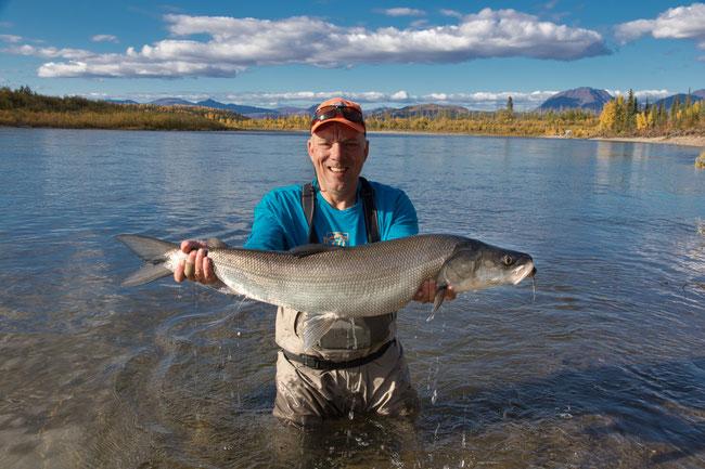 Urs Wehrli, Flyfishing Sheefish Inconnu Kobuk River Alaska