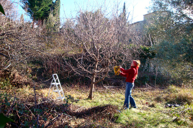 Verwilderte Obstbäume pflegen