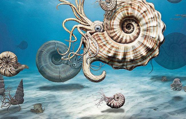 Illustration aus der Präsentation des Preistägers: Fossilien