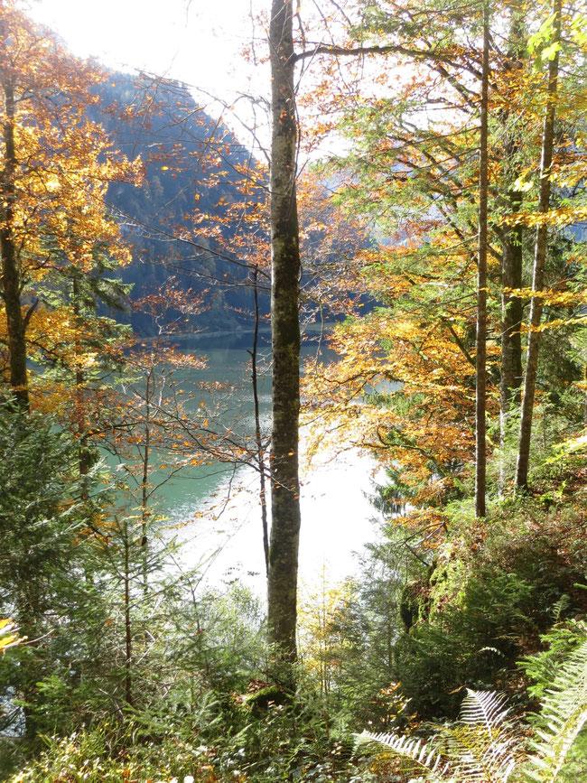 Blick vom Waldlehrpfad auf Saftenwald