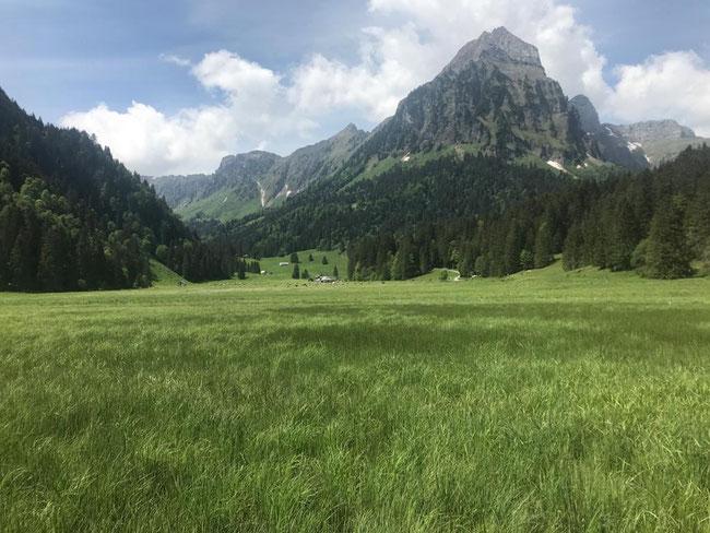 Obersee-Staafel war die erste Alp. die 2020 bestossen wurde.