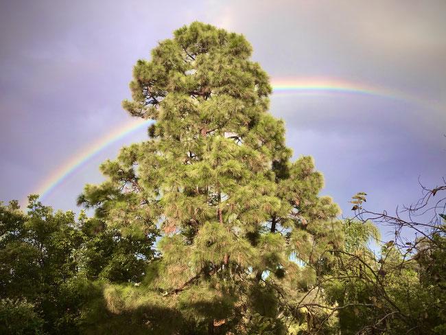 Schnappschuss von Armin Oswald, Blick in seinen Garten und als Tüpfchen auf dem i ein wunderbarer Regenbogen!
