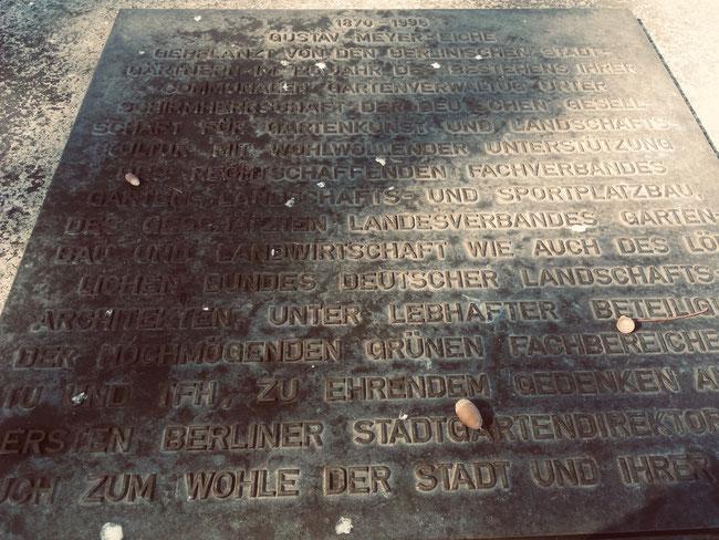 Werneuchener Wiese Berlin Prenzlauer Berg