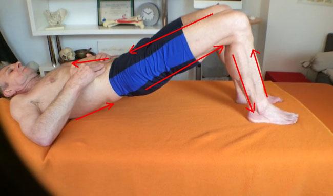 Muskelketten Briding, dynamische Briding