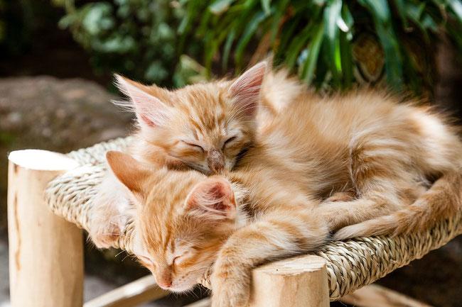 Schlaf gut, Schlafrhythmus, Schlafphasen, Schlaflieder,Einschlafen, Wampel.net die Seite für Kinder und Eltern, Katzenbabys schlafen,