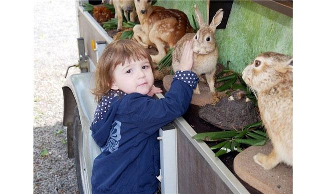 Auf dem Ausstellungswagen des Auetaler Hegerings gibt es präparierte heimische Tiere zu sehen und zu fühlen. Fotos: Archiv/la