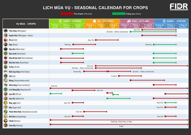 カトゥー族の村や山で採取・栽培される農作物の年間カレンダー