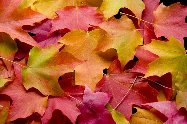Der Herbsttyp Sein Aussehen Seine Farben Lydia Horn Farb Und