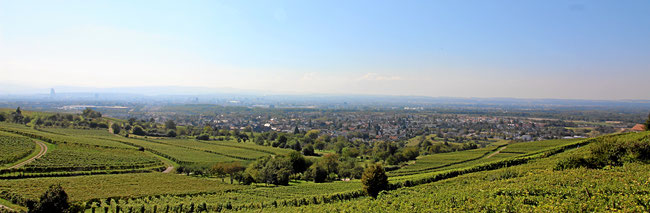 Aussicht von der Terrrasse vom Ochsen Ötlingen auf die Wanderwege in den Reben und das Dreiländereck.