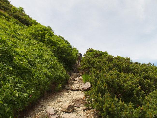右股コースを登り切りようやく尾根に出る。