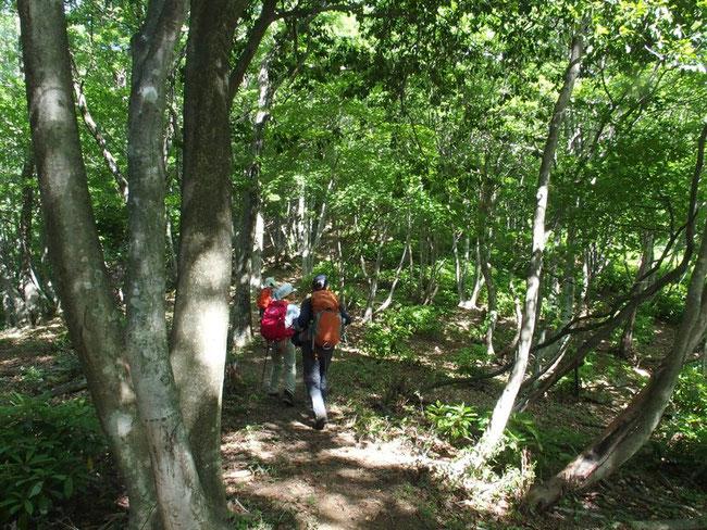 登りはじめ・・・まだ緩やかな山道:新緑といい空気の下を元気いっぱいに飛び出した。