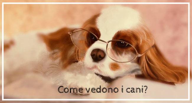 Cane con occhiali: come vedono i cani?