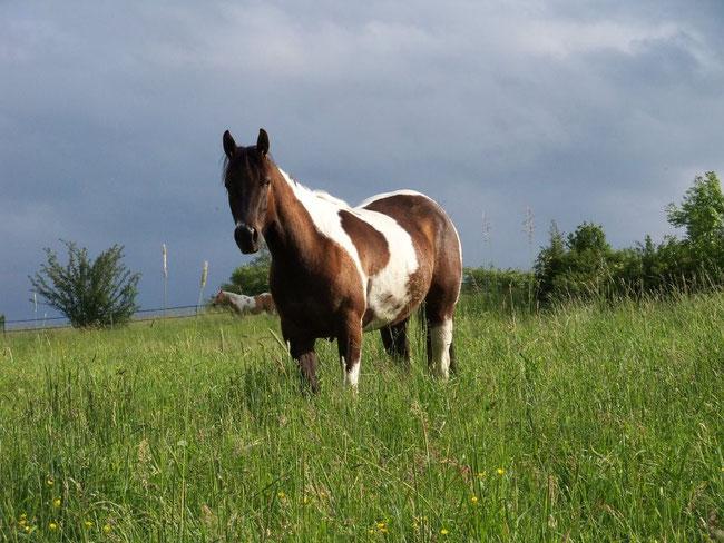 "Mein selbstgezogenes Traumpferd ""Jolene"""