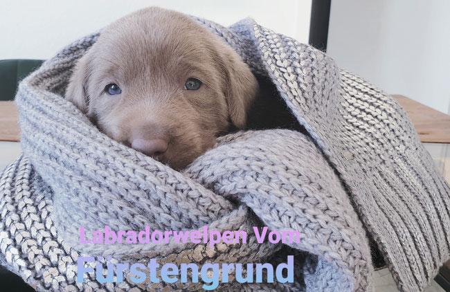 Liebling Klein Frieda immer Hunger ;-)